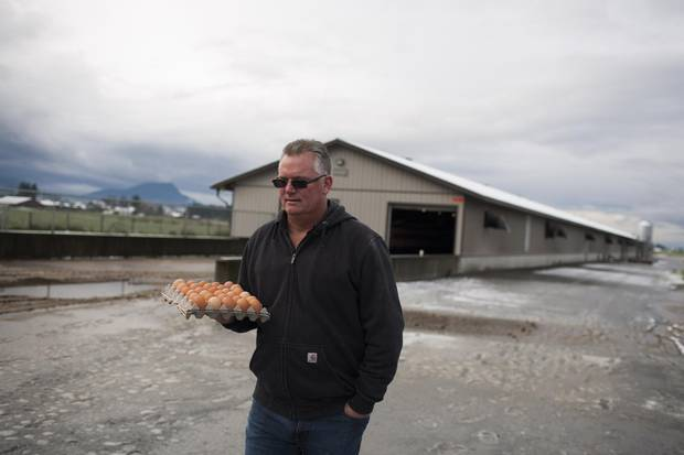 Rob Martens, owner of Twin Willows Enterprises in Chilliwack, B.C., leaves a chicken barn with fresh laid egg samples.