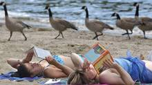 Two young women in Kelowna, B.C.'s Waterfront Park are too absorbed in their reading to notice as a gaggle of geese saunters by. (Gary Nylander/CP)