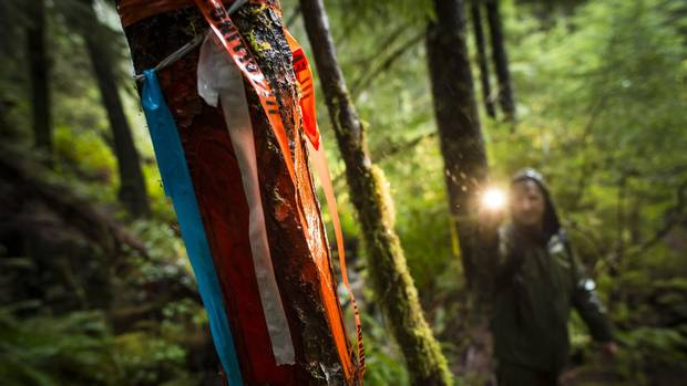 Peter Cressey on the hunt for karst lights up the forestry bounder markers.
