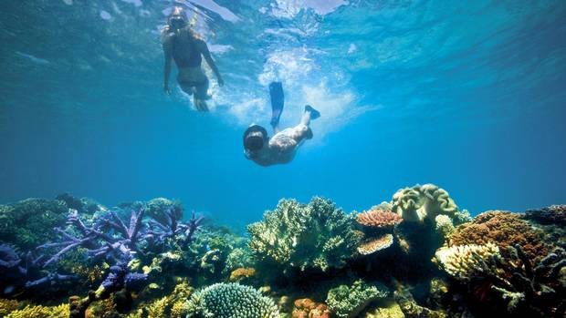 Snorkelling on the Great Barrier Reef.