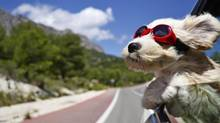 For road trips with your dog, it is best to get a restraining device that will protect them in the case of a collision. (konstantinvintsik/Getty Images /iStockphoto)