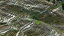 Rice Terraces #2, Western Yunnan Province, China 2012. (Ed Burtynsky)