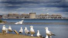 Seagulls sun on the beach where the Rouge River meets Lake Ontario in Toronto on June 11, 2013. In the distance is the Pickering nuclear power plant. (PETER POWER/THE GLOBE AND MAIL)