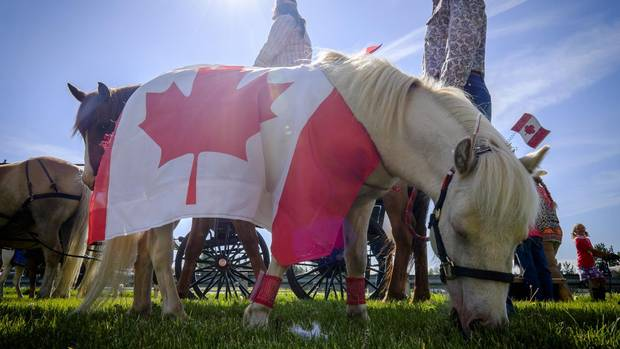 A flag-draped pony grazes before the start of a parade during Canada Day celebrations in Cremona, Alta., Saturday, July 1, 2017.