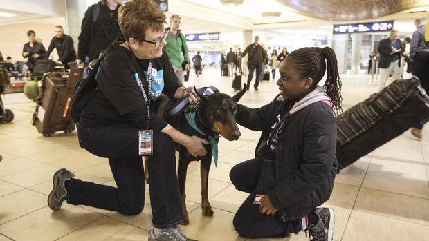 Dog handler Barb Olmstead and Kane, an eight-year-old Doberman Pinscher, meets with traveller Jemima Maluta at the Edmonton International Airport. The airport was the first in Canada to introduced therapy dogs to calm nervous travellers, and others have since followed.