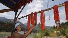 Tyrone McNeil of the Sto;lo Tribal Council checks the sockeye salmon that was cut into strips and hung on a dry rack to cure for up to ten days on the banks of the Fraser river near Hope, BC.
