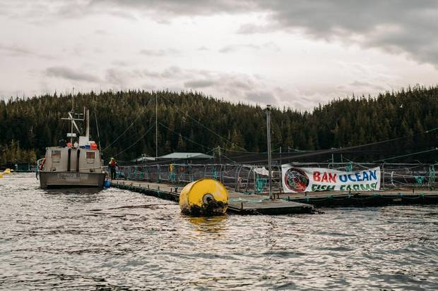 A protest banner hangs on a fish farm on Midsummer Island, B.C. Two scientists are clashing over a viral disease they both detected in farmed salmon and how the Animal Health Centre work with the aquaculture industry has influenced how that disease was reported by the lab.