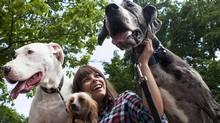 Amberly McAteer sits with Sonic, a Hairless Chinese Crested and two Great Danes, Nessa and Drake, in Berczy Park during the ninth annual Woofstock festival in Toronto on Sunday, June 12, 2011. (Matthew Sherwood for The Globe and Mail/Matthew Sherwood for The Globe and Mail)