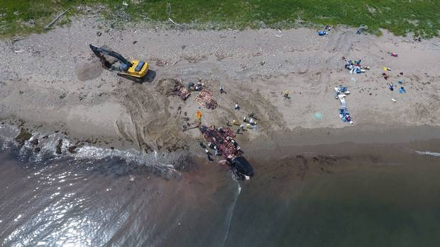 In Shippagan, N.B., a whale carcass lise on the beach after a necropsy.
