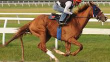 Jockey Alex Solis takes Queen's Plate contender Irish Mission through a workout at Woodbine racetrack