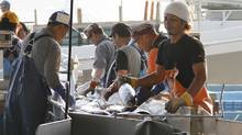 Fish market workers land bonitos at a port in tsunami-affected Kesennuma, Miyagi Prefecture, northeastern Japan. (Koji Ueda/Koji Ueda/AP)