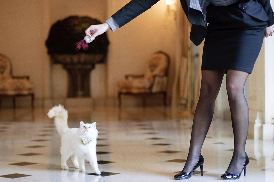 At luxury hotels, pets provide soothing experience – and a marketing opportunity