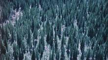 Boreal forest - British Columbia Mount Assiniboine Provincial Park. (photos.com)