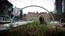 Brenda Grealis sits in a community garden she tends, overseen by the Portland Hotel Society in the Downtown Eastside of Vancouver, Thursday March 13, 2014. (DARRYL DYCK/THE GLOBE AND MAIL)