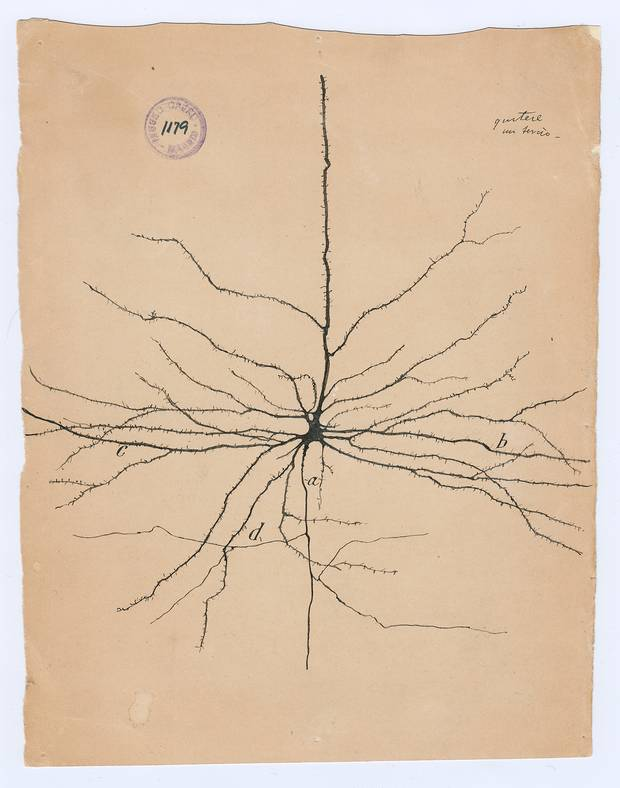 Santiago Ramón y Cajal the pyramidal neuron of the cerebral cortex, 1904 ink and pencil on paper.
