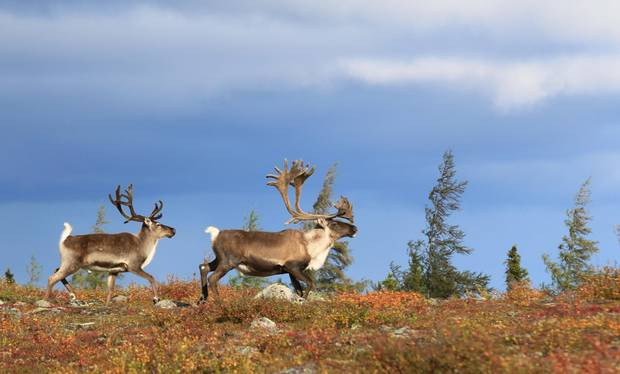 A national advisory panel has been created to provide governments with advice, based on science and traditional knowledge, on how Canada can achieve its 2020 target for protected areas. The panel is set to report back later this year.