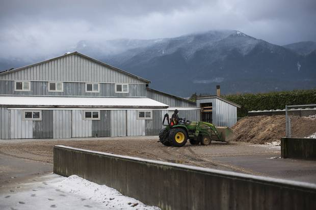 Dale Martens, farm manager at Twin Willows, dumps old manure from a barn in preparation for new chickens.