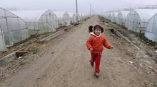 A girl skips between greenhouses on land rented from former farmers in Yangwang village of Liangyuan township, Anhui province, Feb. 4, 2013. The village is a site of a pilot program to give villagers clearer title to land holdings. (JIANAN YU/REUTERS)