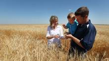 Marty Jespersen checks his wheat field with his son Seth and his wife Melanie on his grain farm near Taber, Alta. (Todd Korol For The Globe and Mail)