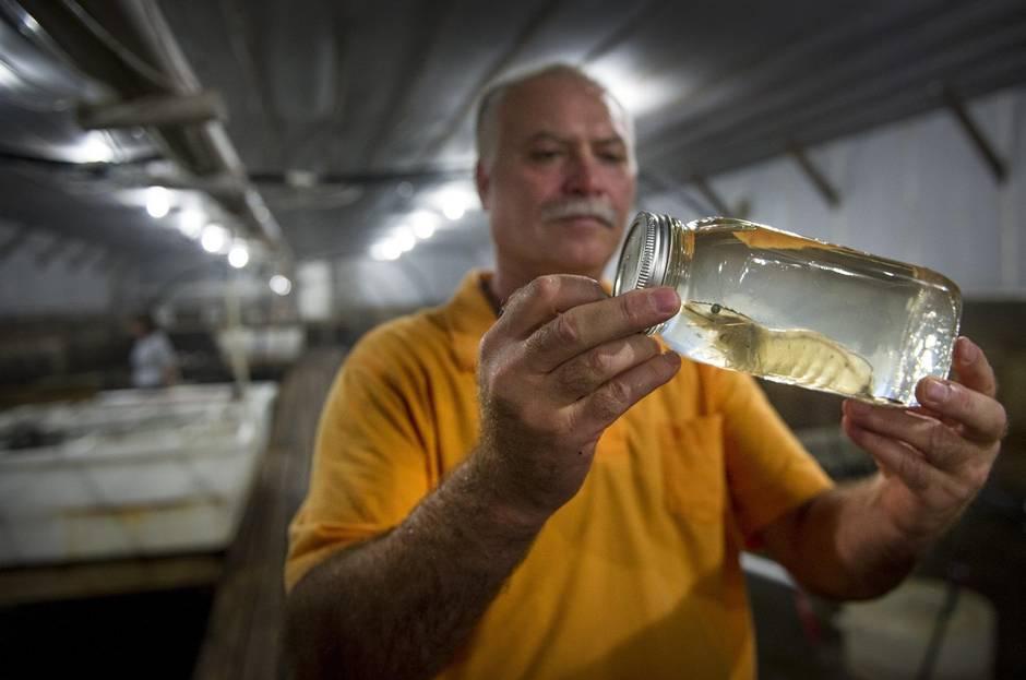 Meet the father-son farmer duo revolutionizing Ontario's shrimp business