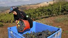 The Dalton winery in northern Galilee is one of scores of kosher wineries that have been established in Israel in recent years, many of them boutique operations.