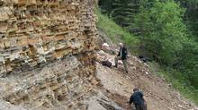 "Paleontologists work on fossil-bearing sediments at the ""North Face"" fossil site in Driftwood Canyon Provincial Park, British Columbia, where the extinct hedgehog fossils were collected, in 2010. (Dave Greenwood/THE CANADIAN PRESS)"