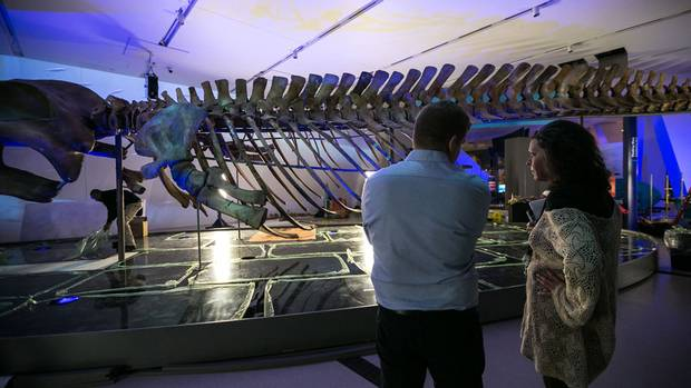 The ROM's display of the skeleton is open to the public on Saturday.