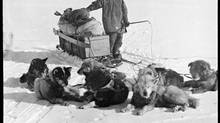 Choosing dogs over horses led Amundsen to reach the South Pole before the doomed Scott expedition. (NASJ)