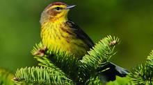 Bird habitat is a continent-wide concern – and must be preserved. (Jeff Nadler/Pew Environment Group)
