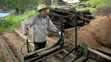 Lumber workers process Yunnan pine at the Gengma Forest Product Corp. Ltd. lumber yard in Gengma, Yunnan Province, China, on June 10, 2011. Sino-Panel, a subsidiary of Sino-Forest, purchased forest land from Gengma Forest Product Corp. Ltd. and used the processing factory. (Adam Dean/Adam Dean)