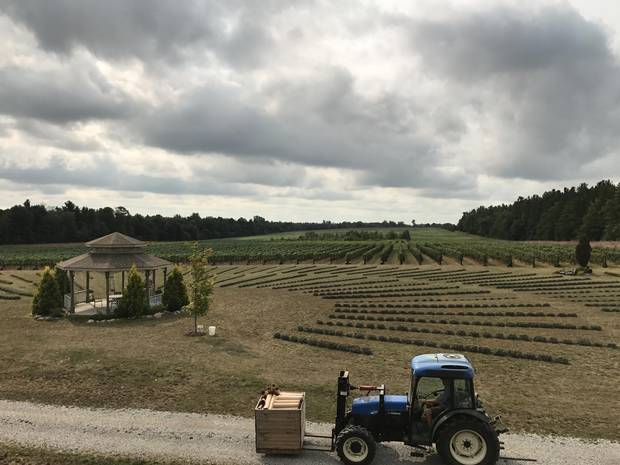Norfolk county farmers have had to adapt to a world with less demand for tobacco, instead planting grapes for wine, apple orchards and ginseng.