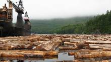 Logging in Clayoquot Sound. Raft of freshly cut trees about to be loaded aboard a logging barge near Meares Island. (Susan Hare/Susan Hare)