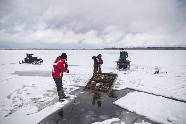 Brian Lewis, left, and Jason Boyles, middle, guide the tray of oysters as Erskine Lewis pulls with the four-wheeler.
