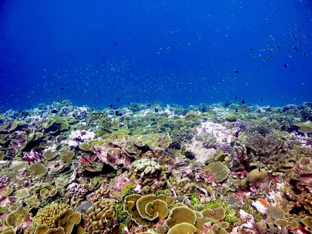 Dr. Julia Baum hopes to glean information that will help researchers predict what's in store for reefs around the globe as oceans warm.
