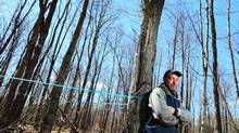 Steve Cote, a maple sugar producer, poses in his tapped forest in Sawyerville, Quebec, April 17, 2013. (Christinne Muschi For The Globe and Mail)
