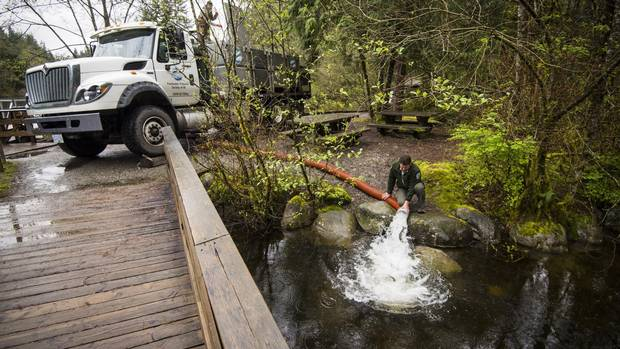 Barry Kolodychuk with Freshwater Fisheries Society of BC restocks Rice Lake in North Vancouver April 5, 2016 with Fraser Valley Rainbow trout from a Hatchery. (John Lehmann/The Globe and Mail)