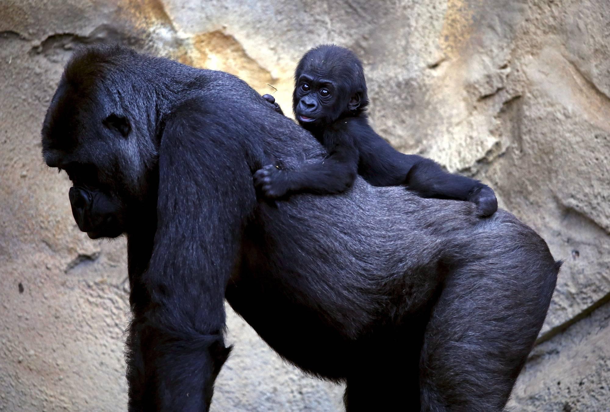The Year in Photos: Animals & Wildlife