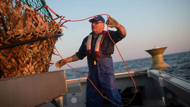 Crab harvester Andre Bourgeois untangles a rope while unloading a trap on July 14, 2017, in Cheticamp, N.S.
