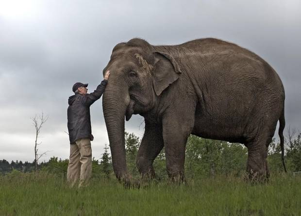 A keeper pats Lucy, a 40-year-old asian elephant, during a walk at the Edmonton Valley Zoo in Edmonton, Alberta on Saturday, June 11, 2016.