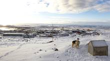 A dog howls from the hillside overlooking Iqaluit. (Peter Power/Peter Power/THE GLOBE AND MAIL)