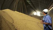 Newly harvested soybeans are stocked in Sorriso, Mato Grosso state in western Brazil in this file photo. (PAULO WHITAKER/REUTERS)