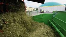Hackled corn plants are delivered to a bioenergy plant in Germany in this file photo. (Ralph Orlowski/Ralph Orlowski/Getty Images)