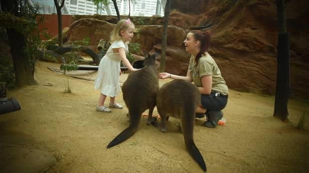 Crystal Luxmore's daughter Peregrine feeds kangaroos with a zookeeper in Sydney, Australia.