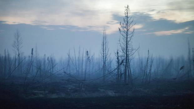 A charred swath of boreal forest, along Highway 63 near Fort McMurray.