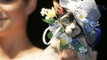 A cat wears designer attire during Pets Fashion Week Russia in Moscow.