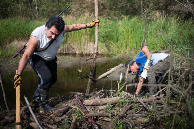 "Terry ""Sonnyboy"" Courtoreille, left, and Maurice Aaron McDonald check and reset beaver traps near Fort McKay, Alta., in August 2015. McDonald, an experienced fur trapper, was hired by Suncor to trap ""problem beavers"" along industry roads."
