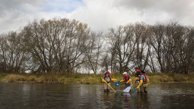 Mark R. Servos, Canada Research Chair in water quality protection, works with some of his University of Waterloo PhD candidates to collect fish from the Grand River in Kitchener, Ont. on Saturday, Nov. 7, 2015. For years he has been monitoring chemical loadings in the Grand River near Kitchener. Left to right are Meghan Fuzzen, Mark Servos, Keegan Hicks and Maricor Arlos. Ms. Fuzzen uses an electric instrument to momentarily stun the fish, which are then scooped up by the other members.
