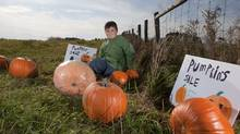 Nine-year-old Jamie Burrell started up Graveyard Pumpkins in Thornhill Ont. There, he raises pumpkins and donates the what he makes selling them to the Toronto Humane Society. (Matthew Sherwood for The Globe and Mail/Matthew Sherwood for The Globe and Mail)
