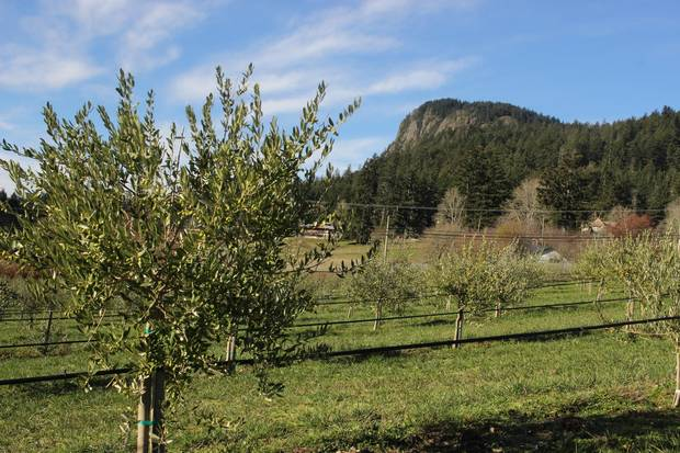 George and Sheri Braun's 72-acre farm with a gentle south-facing slope, great drainage and lots of sun.