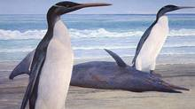 This undated graphic illustration released by University of Otago on Wednesday, Feb. 29, 2012 shows a giant penguin called a Kairuku. It's taken 26 million years, but scientists say getting the first glimpse at what a long-extinct giant penguin looked like was worth the wait. (University of Otago/The Associated Press/University of Otago/The Associated Press)